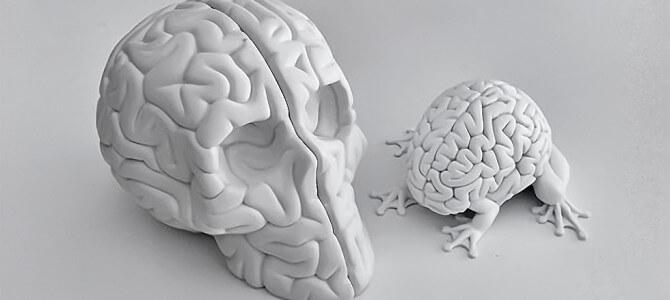 Воздействие рекламы на рептильный мозг